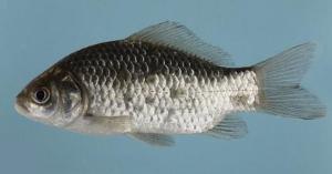 鱼病防控有哪些要点